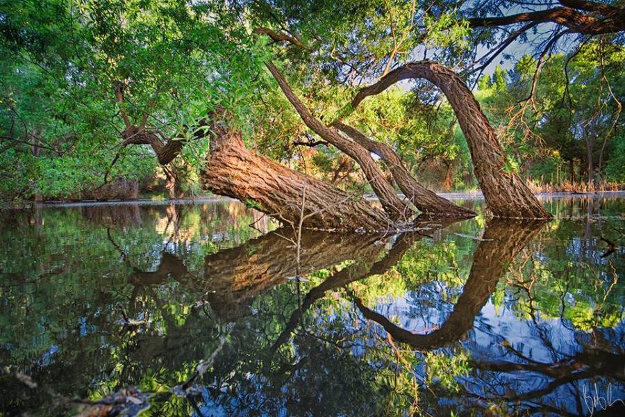 Symmetrical naturephoto by Bob Larson   Pixdaus 900x600