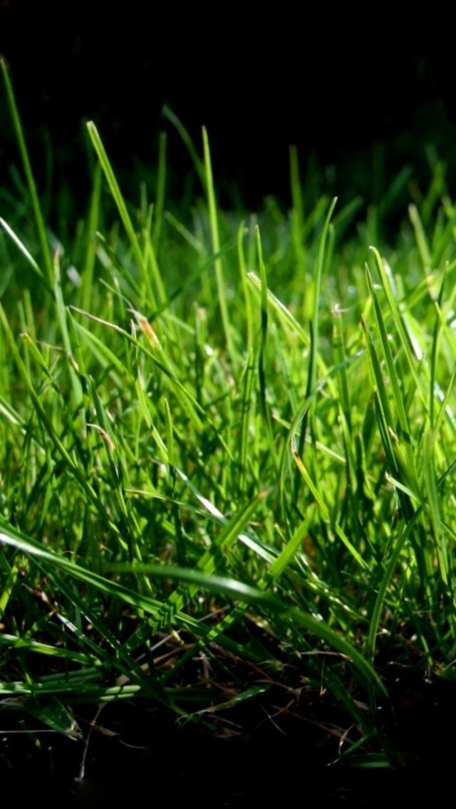 Wallpaper grass apple hdwallpapersfor desktop http nature jpg 640x1136