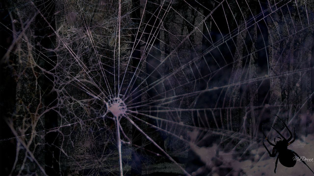 Spider Web Backgrounds 1280x720