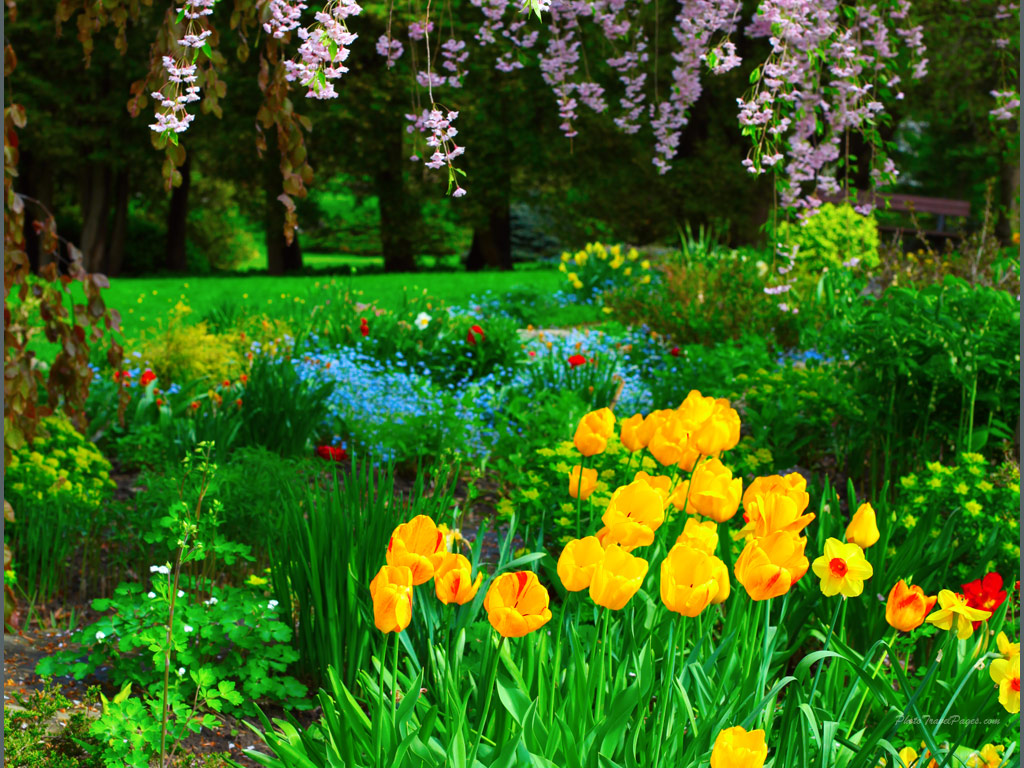 spring crocuses wallpaper size home wallpapers spring wallpapers 1024x768