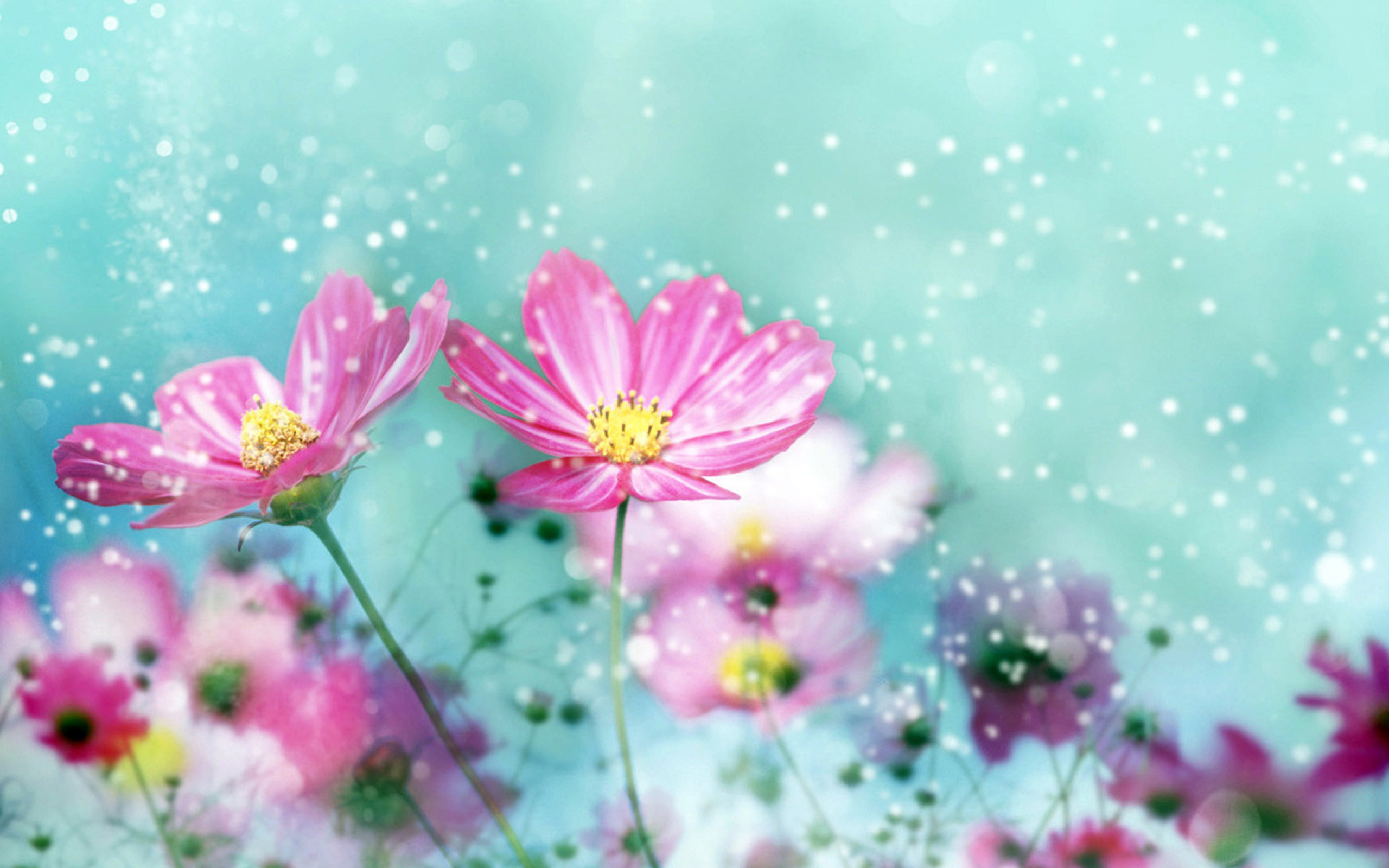Beautiful Flowers Wallpaper HD Desktop 4513 Wallpaper 2560x1600