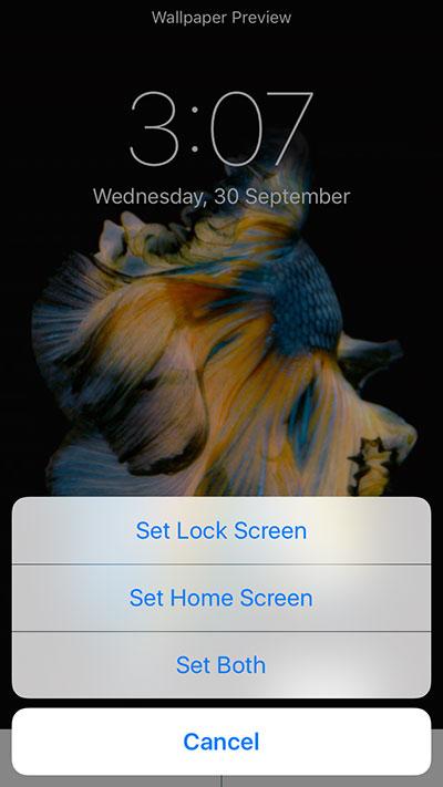 50+ Live Wallpaper iPhone 6s Not Working on WallpaperSafari