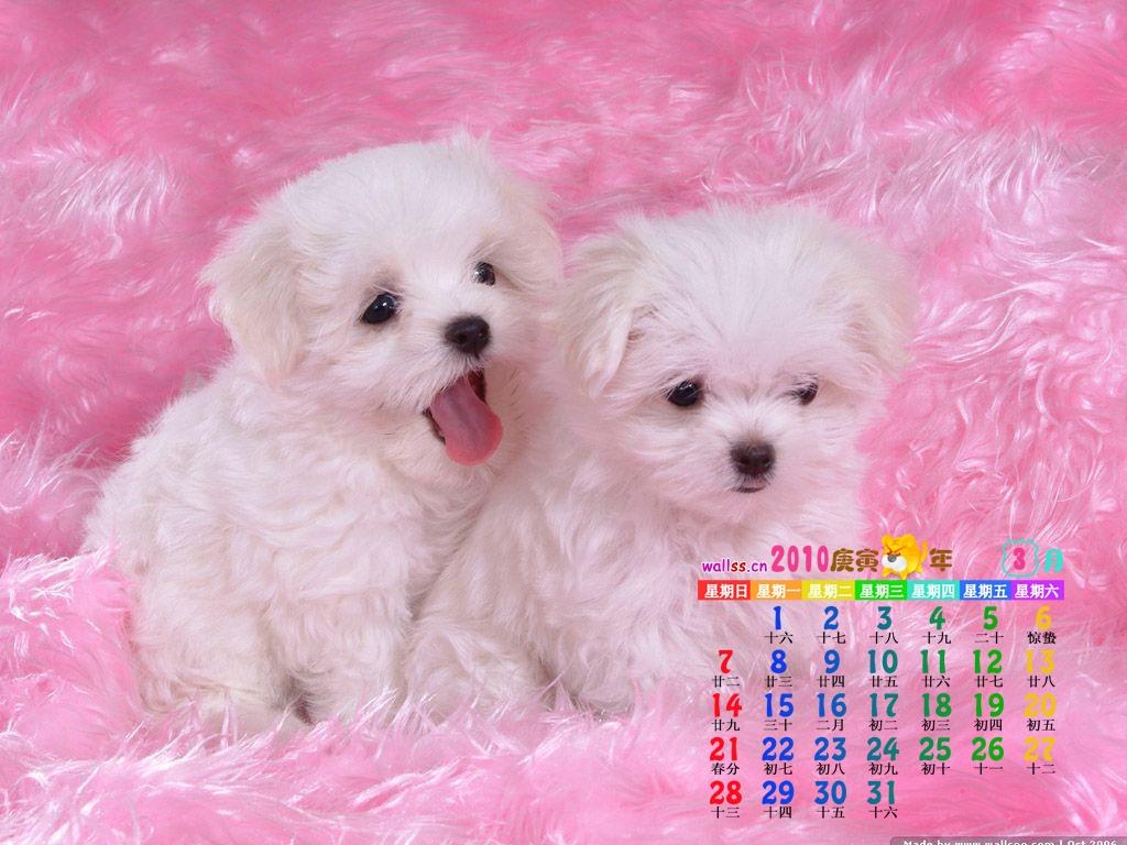 dogs cute desktop wallpaper download dogs cute wallpaper in 1024x768