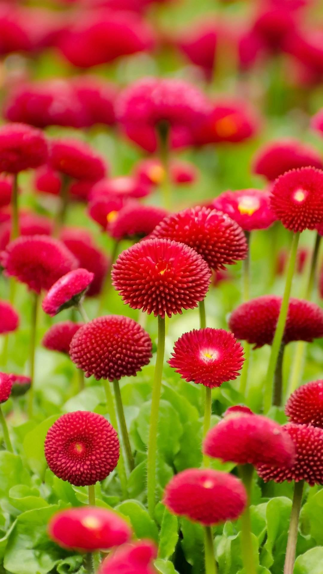 Flower Wallpaper HD for Android   APK Download 1080x1920
