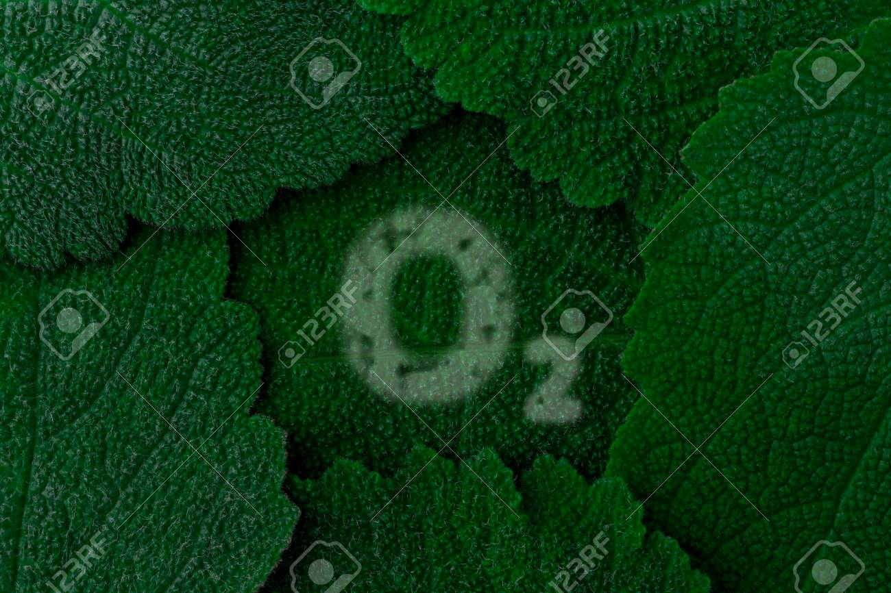 Oxygen O2 Dark Green Leaves Background Close Up Stock Photo 1300x866