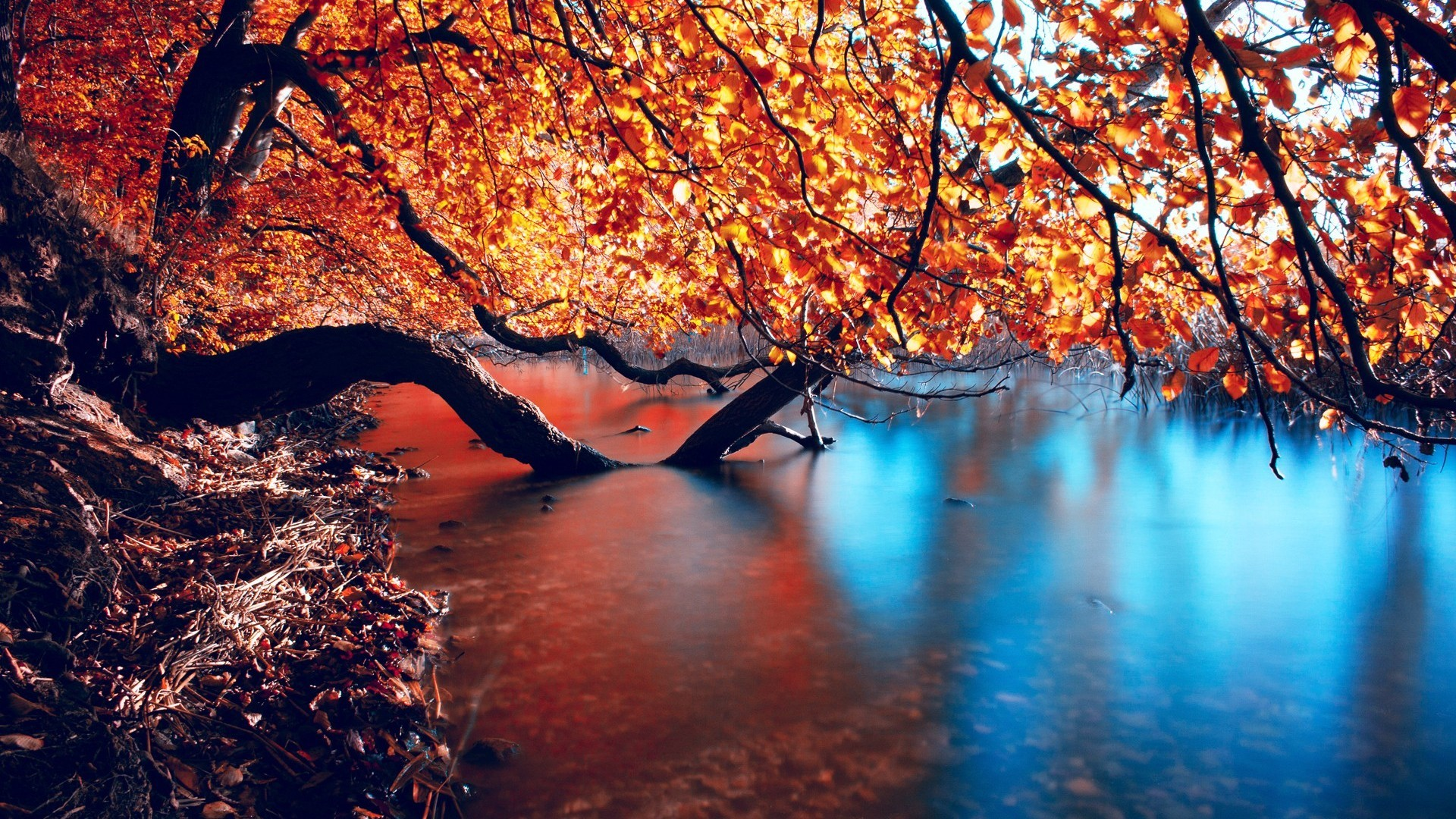 Autumn Background Wallpapers WIN10 THEMES 1920x1080