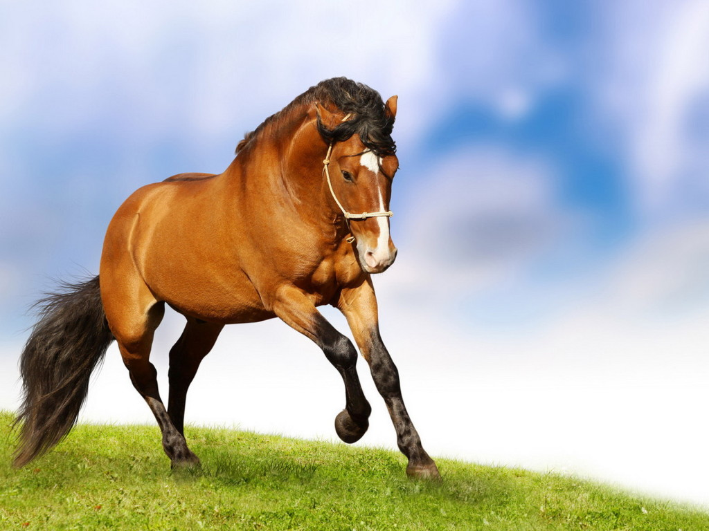 Wallpaper Horse Desktop 1024x768
