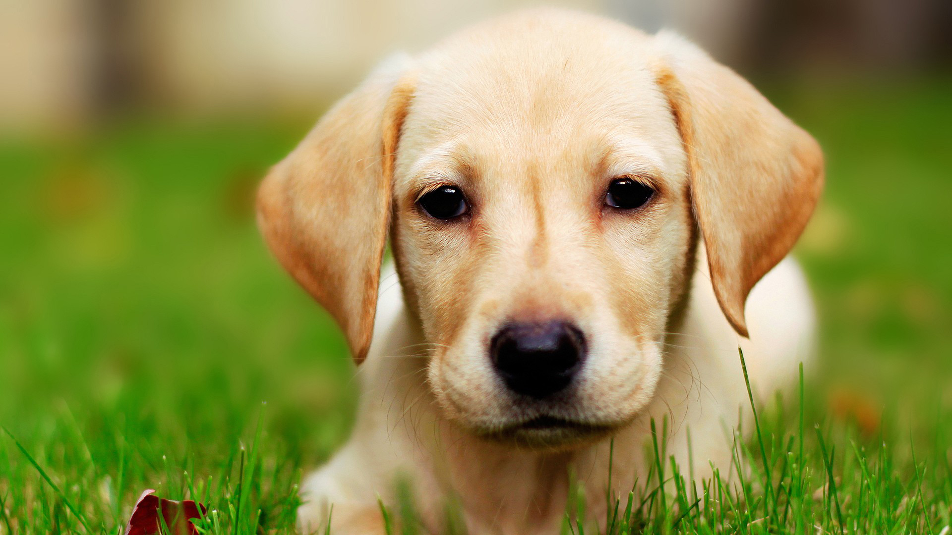 Dog Wallpaper HD Pretty Photos 1920x1080