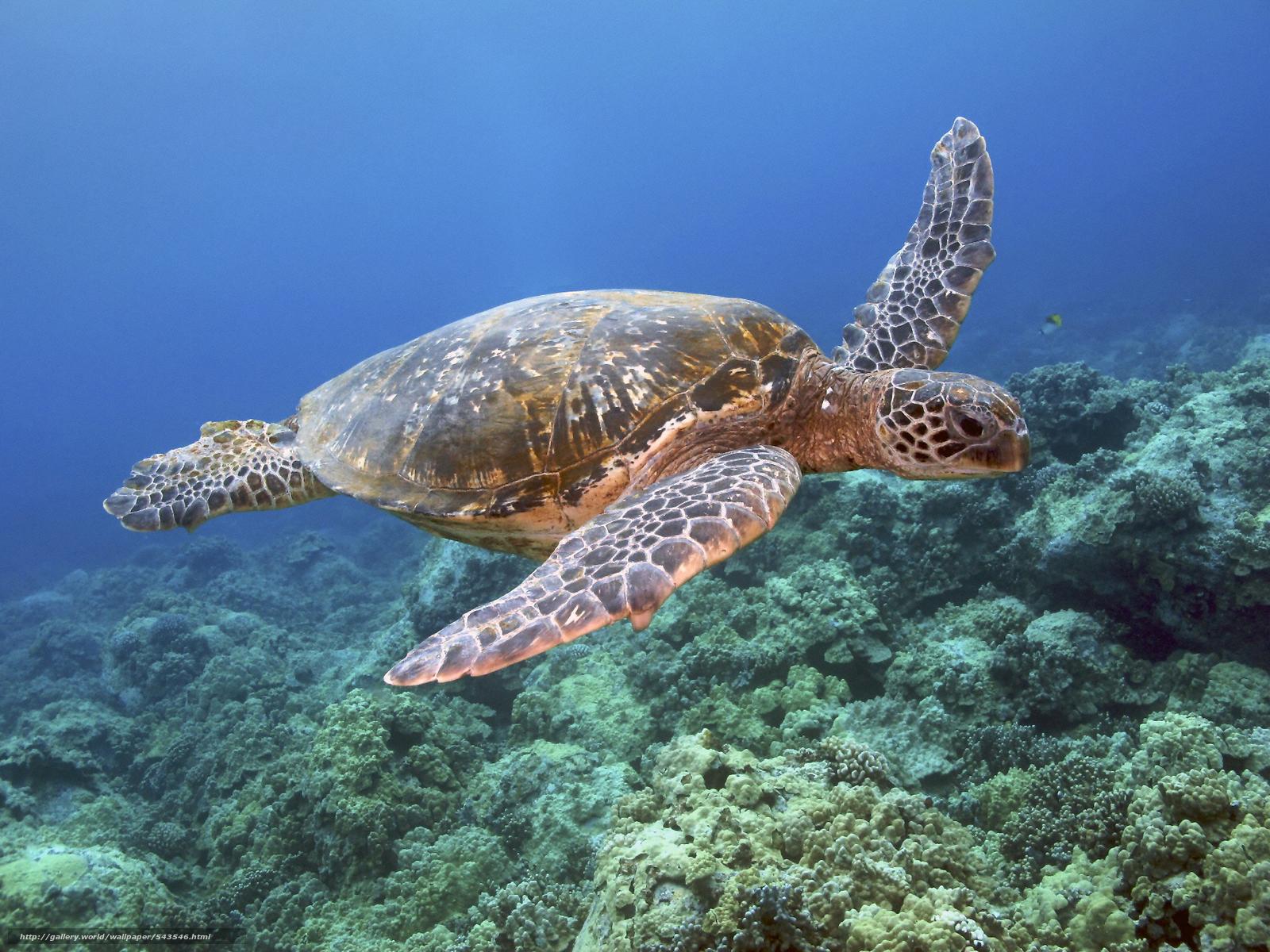 Download wallpaper sea sea turtle bottom desktop wallpaper in 1600x1200