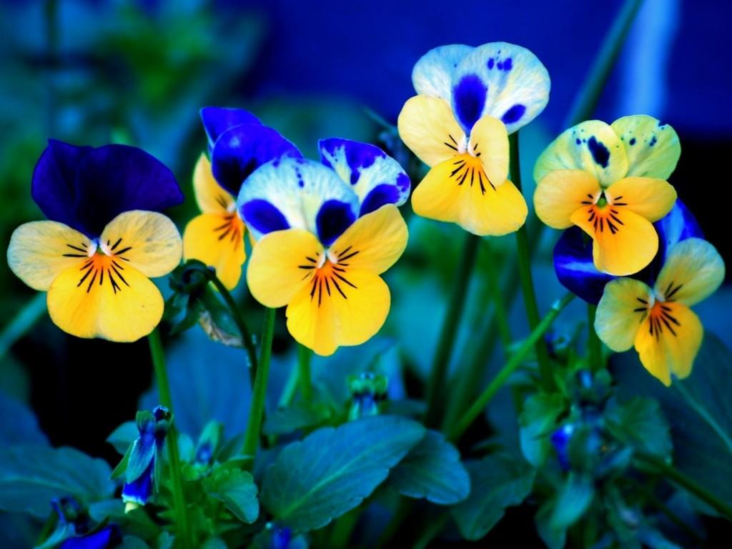 fondos de pantalla de flores gratis Fondos de Pantalla de Flores 6 1024x768