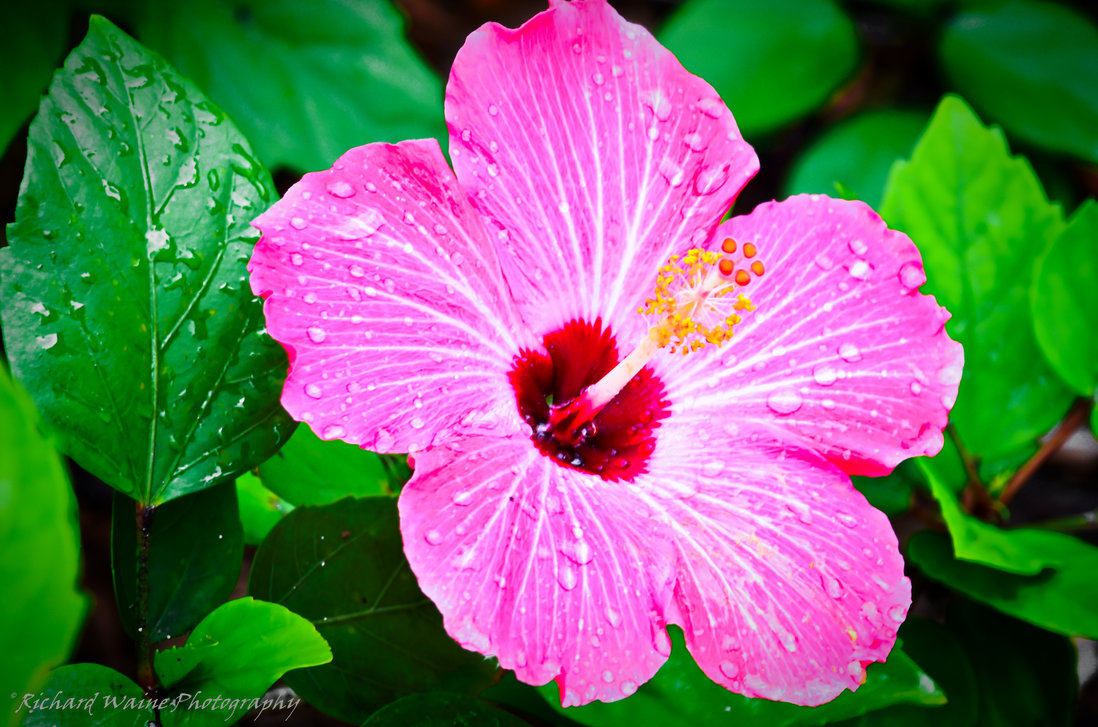 Free Download Tropical Flower Names And Pictures Beautiful Flowers