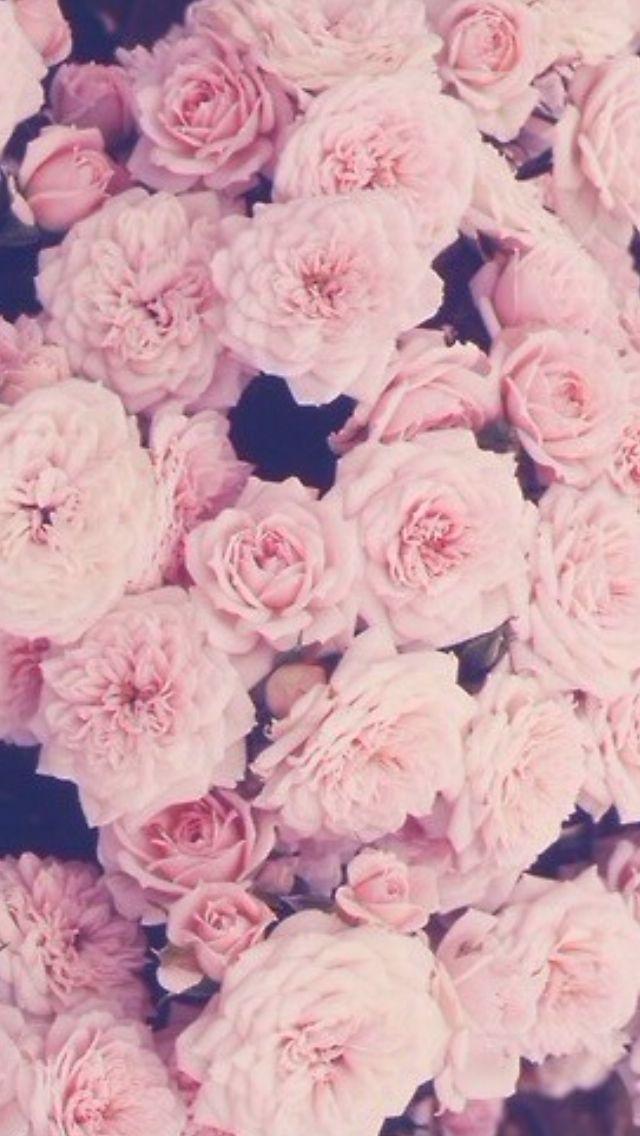 41+ Rose Gold iPhone Wallpaper on WallpaperSafari