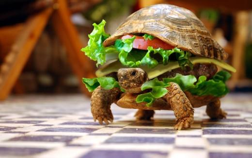 30 Cute Desktop Turtle Wallpapers TutorialChip 520x325