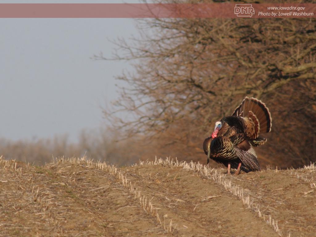 1024x768 turkey desktop pc - photo #47