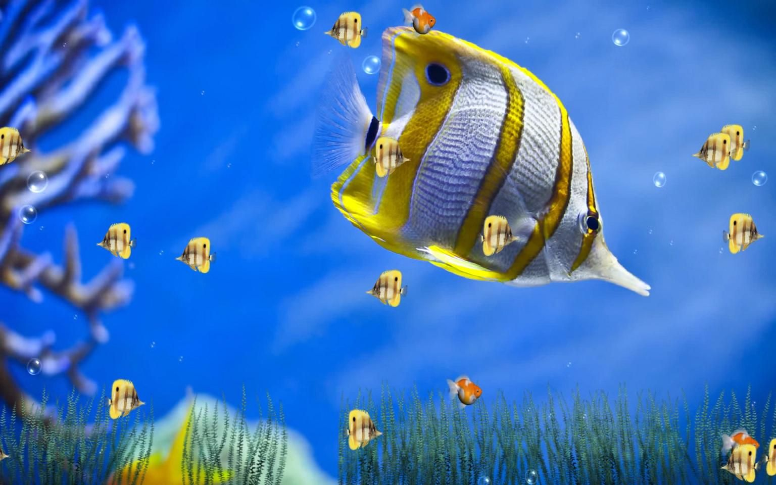 moving fish backgrounds no downloads Animated Wallpapers 1536x960