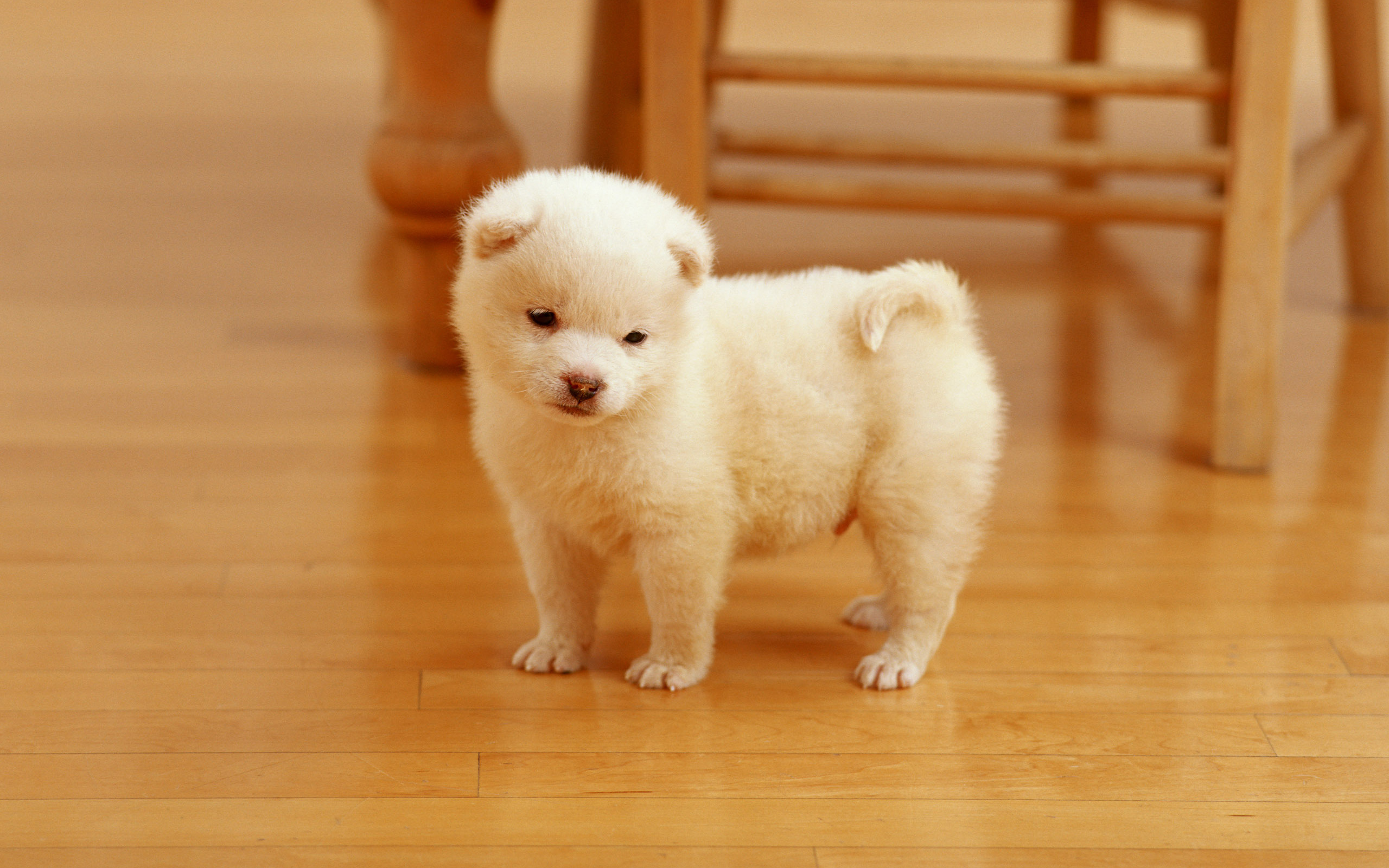 Cutest Puppy Wallpapers HD Wallpapers 2560x1600
