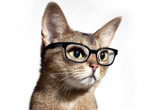 Cat with glasses 10 262133kjpg 580x386