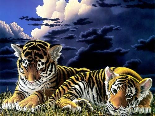 William Schimmel Baby Tiger Cubs Screensaver Screensavers 500x375
