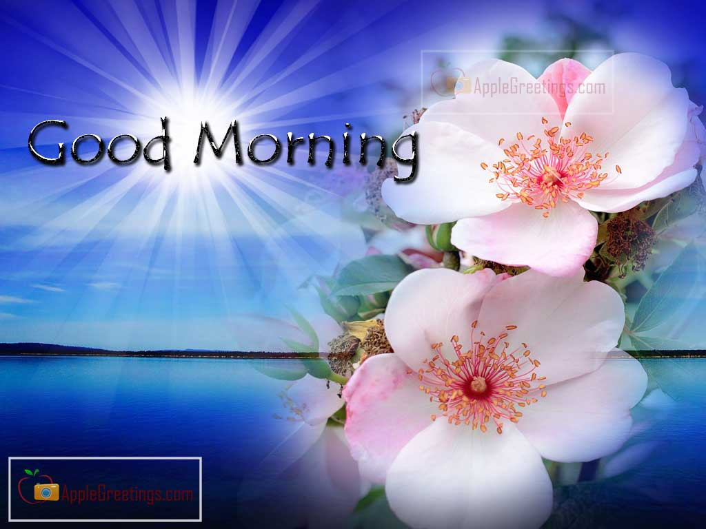 Download Good Morning Greetings With Flowers J 100 1 Id1297