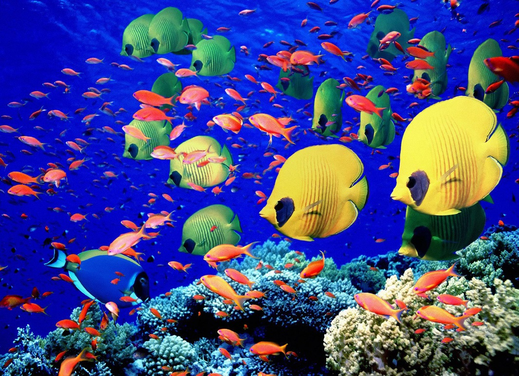 Underwater sea creatures and other animals Wallpapers 1066x774
