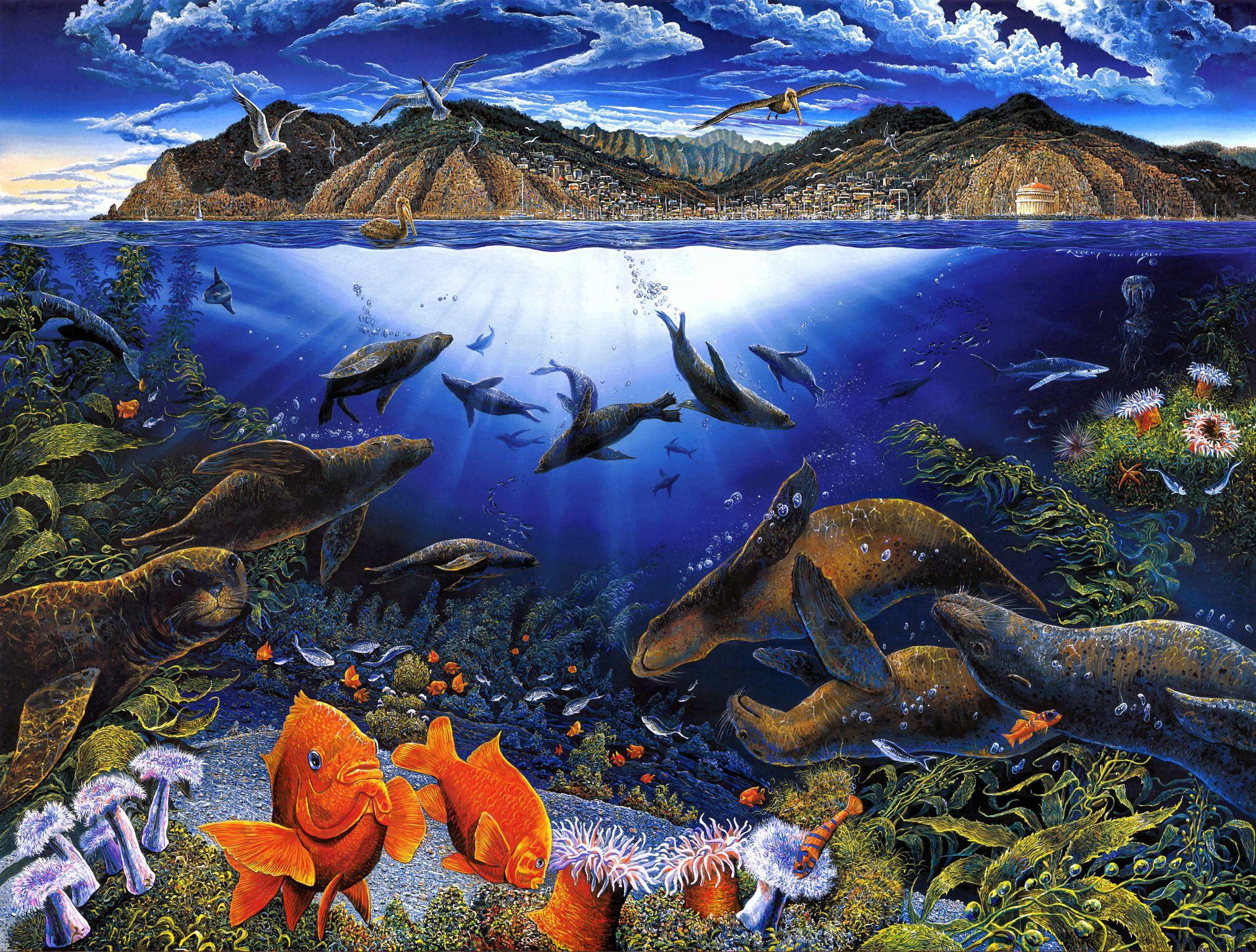 Animal   Sea Life Wallpaper 2027x1537