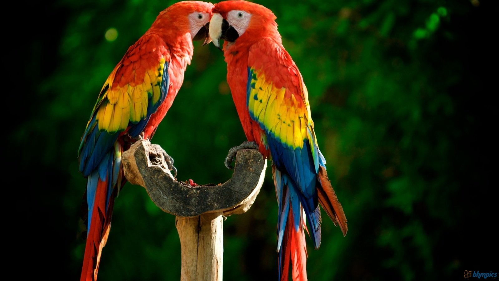 Parrot Images YG556 High Quality Wallpapers For Desktop And Mobile 1600x900