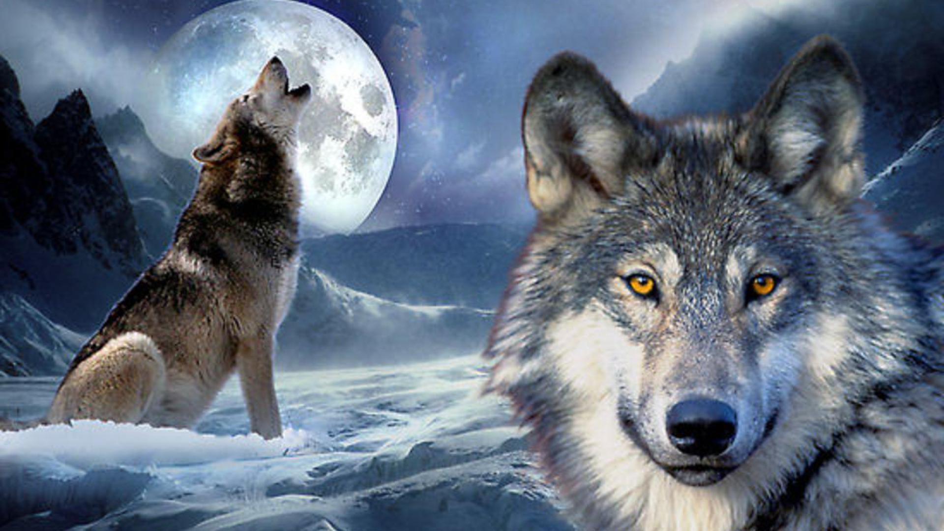 38 Wolf Full Moon Wallpaper On Wallpapersafari