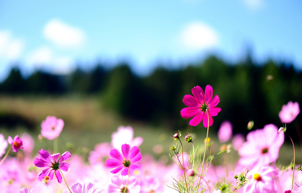 posts mobile screensavers and wallpapers flowers mobile 596x380