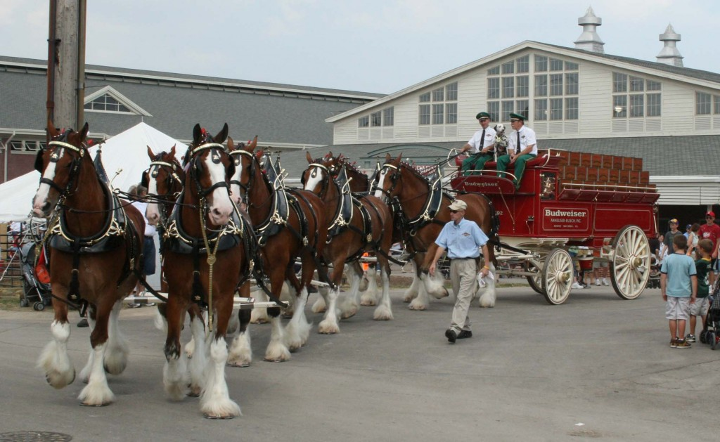 46 Budweiser Clydesdales Wallpaper On Wallpapersafari