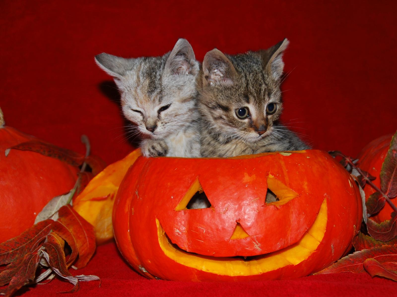 Home Holidays Halloween Cute Halloween Desktop Wallpaper 1600x1200