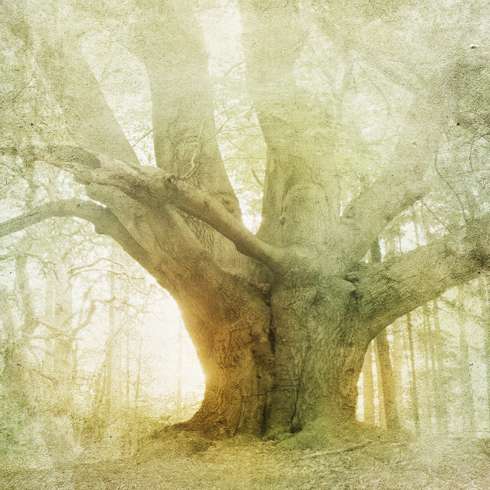 Vintage Old Tree In The Forest Wall Mural ohpopsi Wallpaper 1000x1000