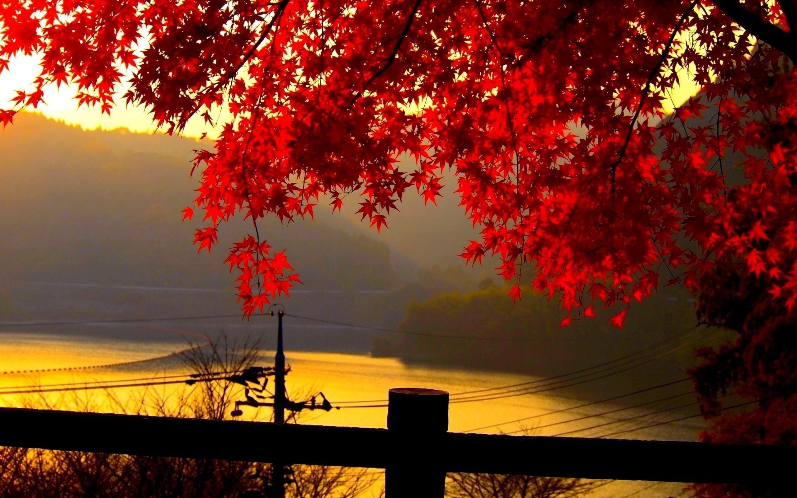 Autumn Landscape Wallpapers 2560x1600