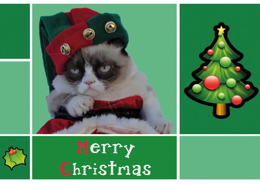 Grumpy Cat Christmas Wallpaper animalgals 1600x848