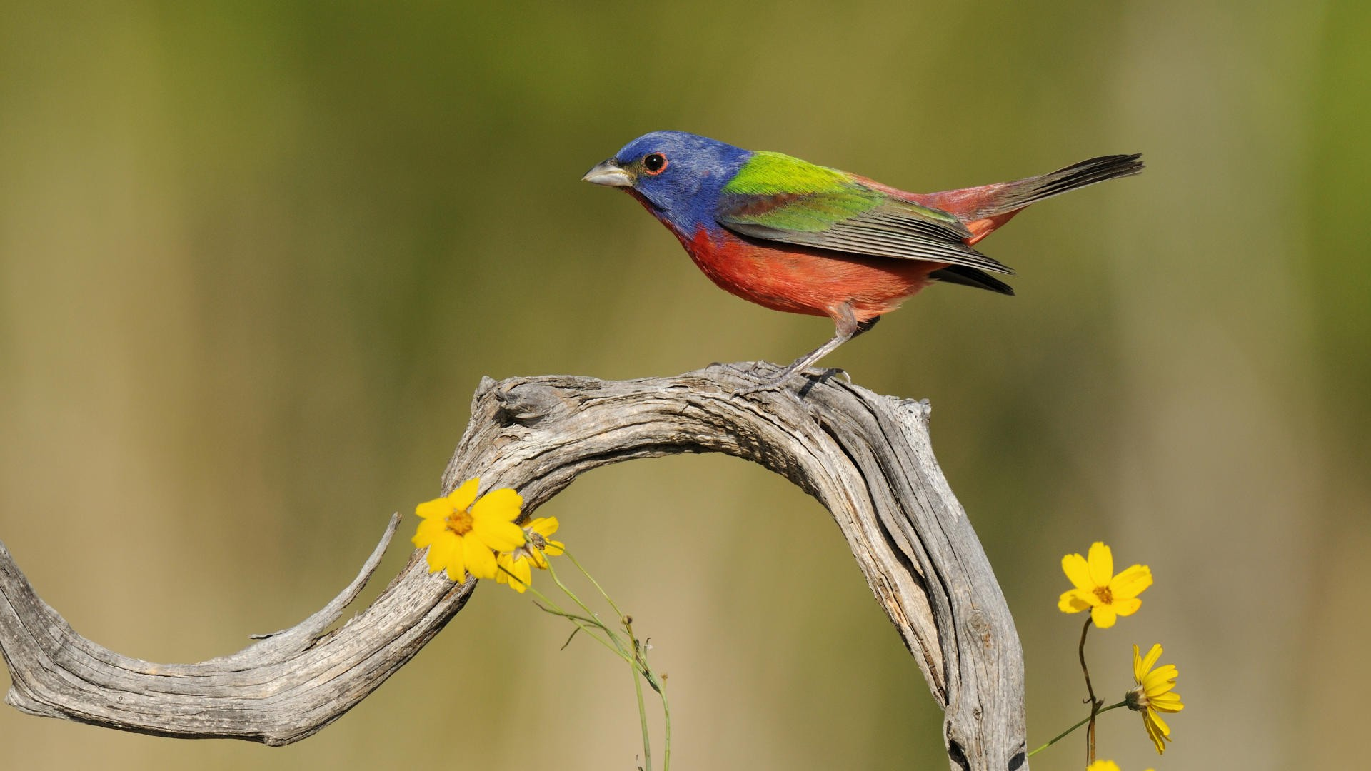 Cute Birds Hd Wallpaper Free Download: Bird HD Wallpaper
