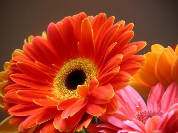 Beautiful Wallpapers gerbera and daisy flower wallpaper 600x449