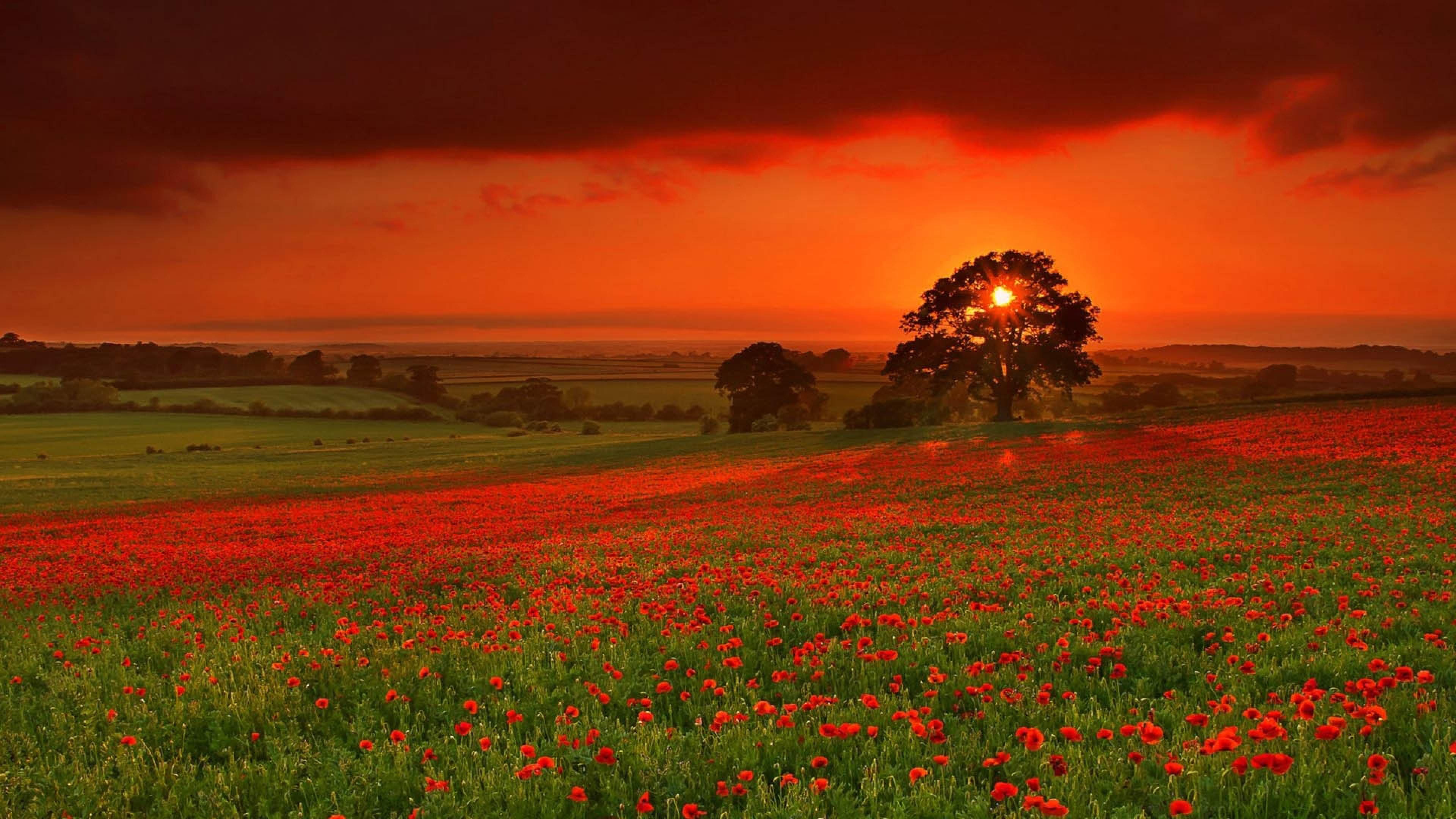 Autumn Sun Flowers Orange Red Wallpaper Background 4K Ultra HD 3840x2160