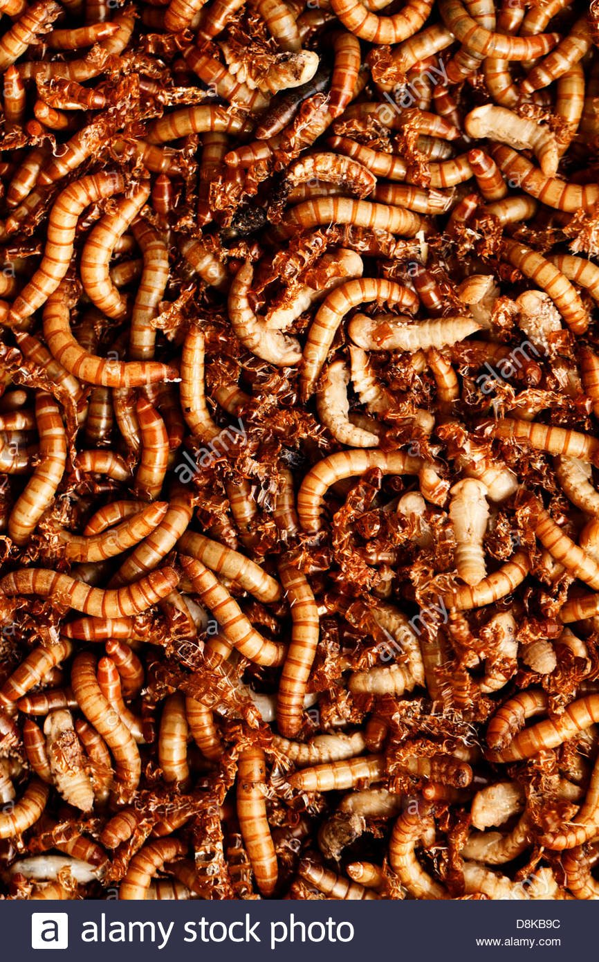 many ugly worms as background Stock Photo   Alamy 866x1390
