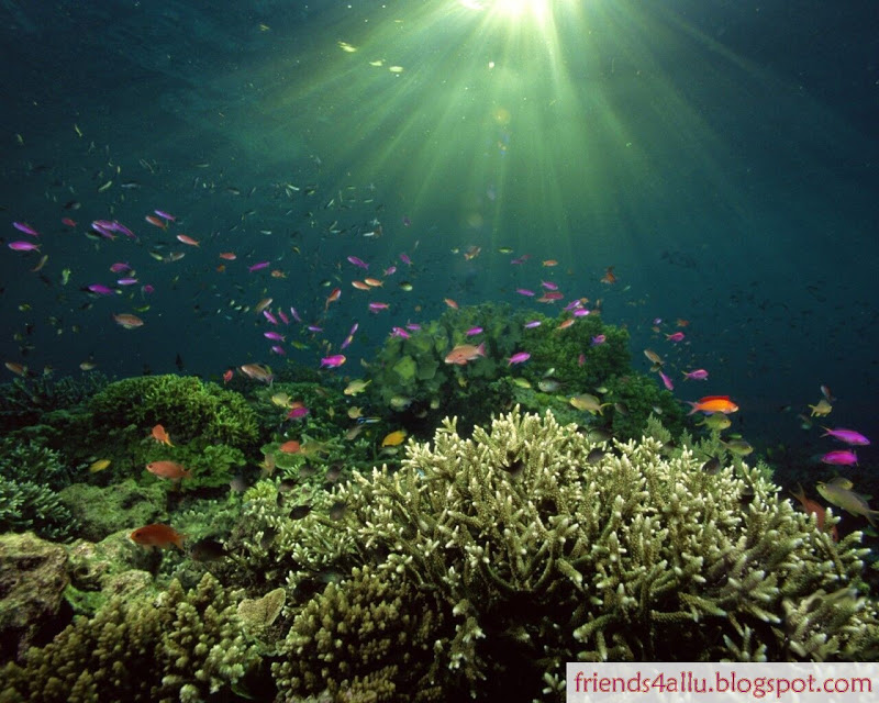 Ocean Life Wallpapers Quotes Wallpapers 800x640