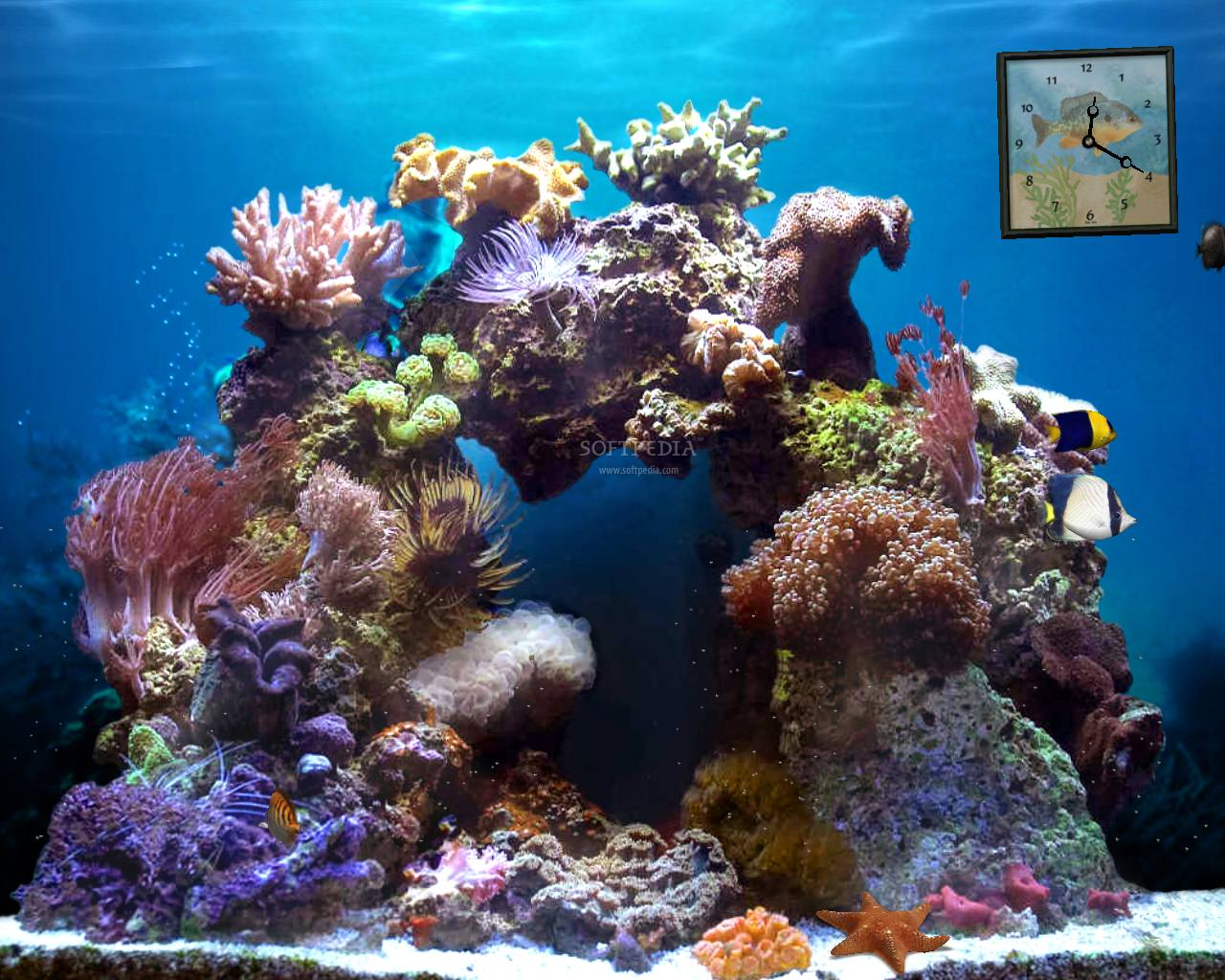 Beautiful Reef   Animated Wallpaper   This is the image displayed by 1280x1024