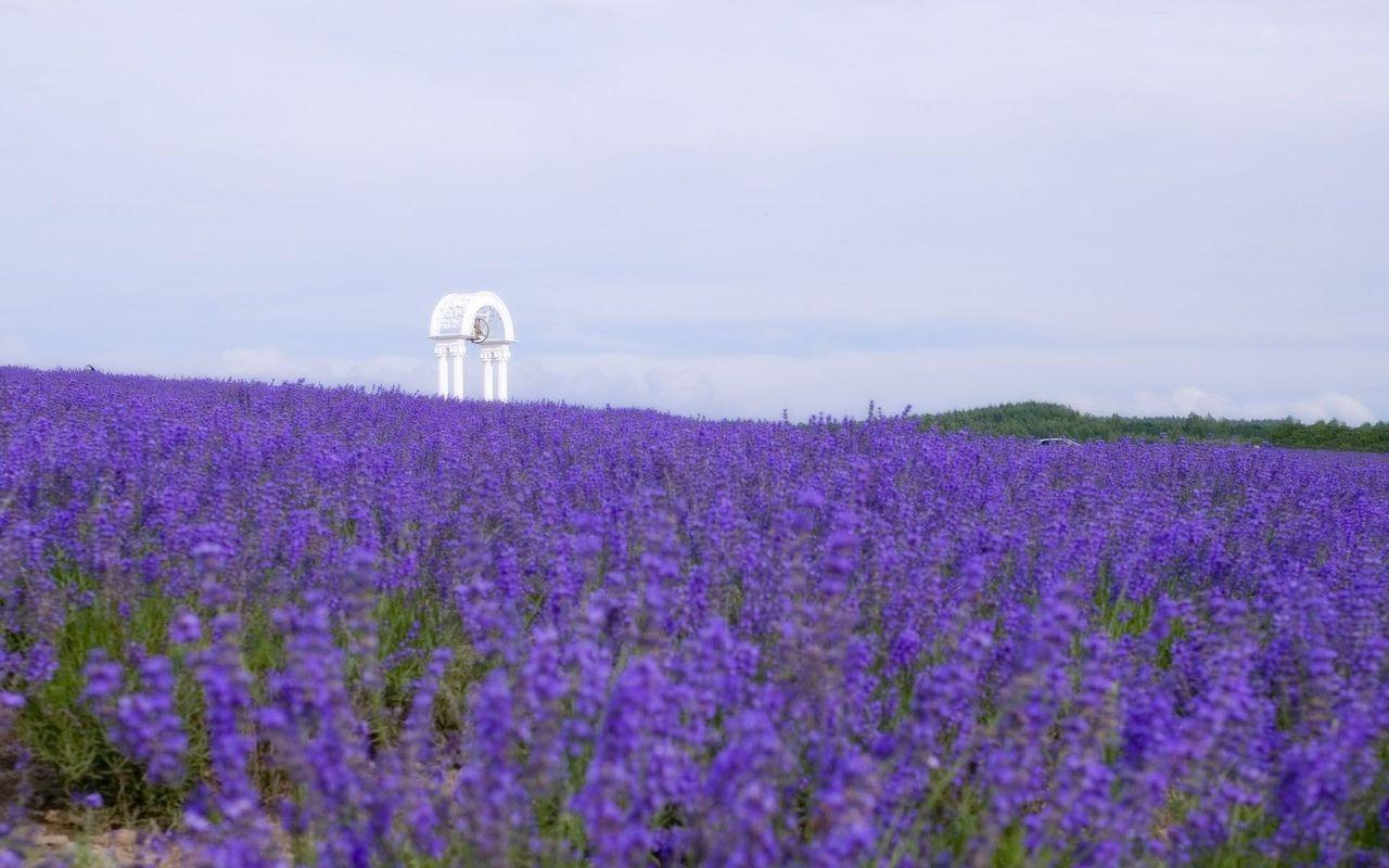 Download Lavender field wallpaper 1280x800