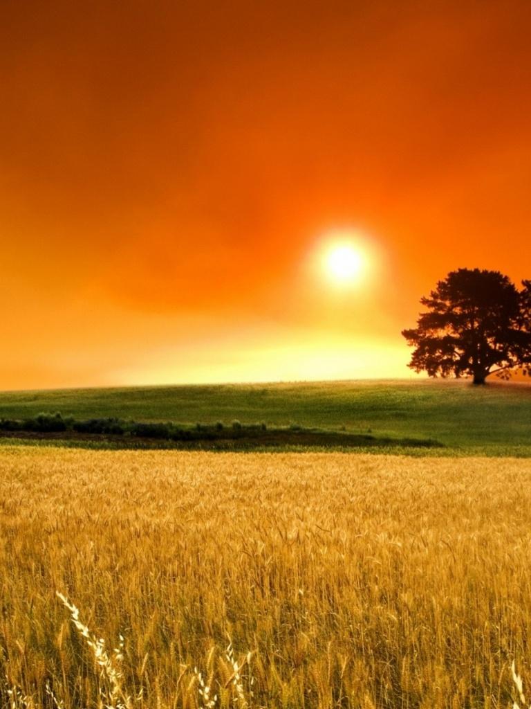 768x1024 corn field sunset grass trees ipad wallpaper 768x1024 corn 768x1024