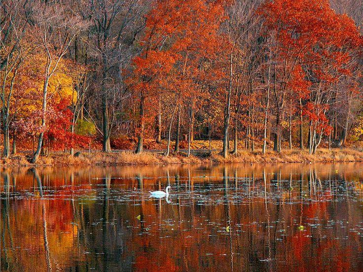 Fall Scenes Wallpaper And Screensavers Autumn Splendor 736x552