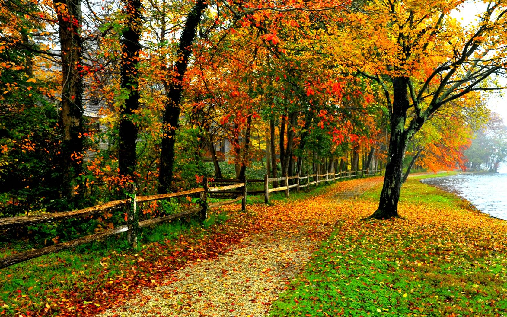 Pics Photos - Fall Foliage Wallpaper
