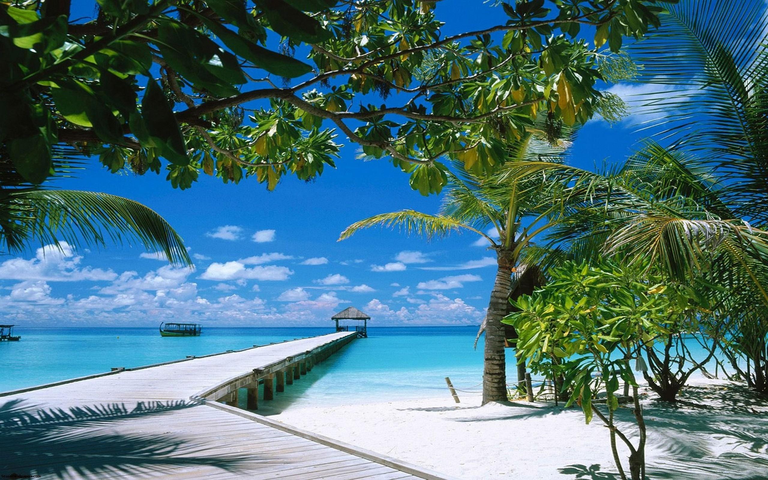 Download Exotic Beach Tropical Wallpaper Desktop 562769 1888 2560x1600