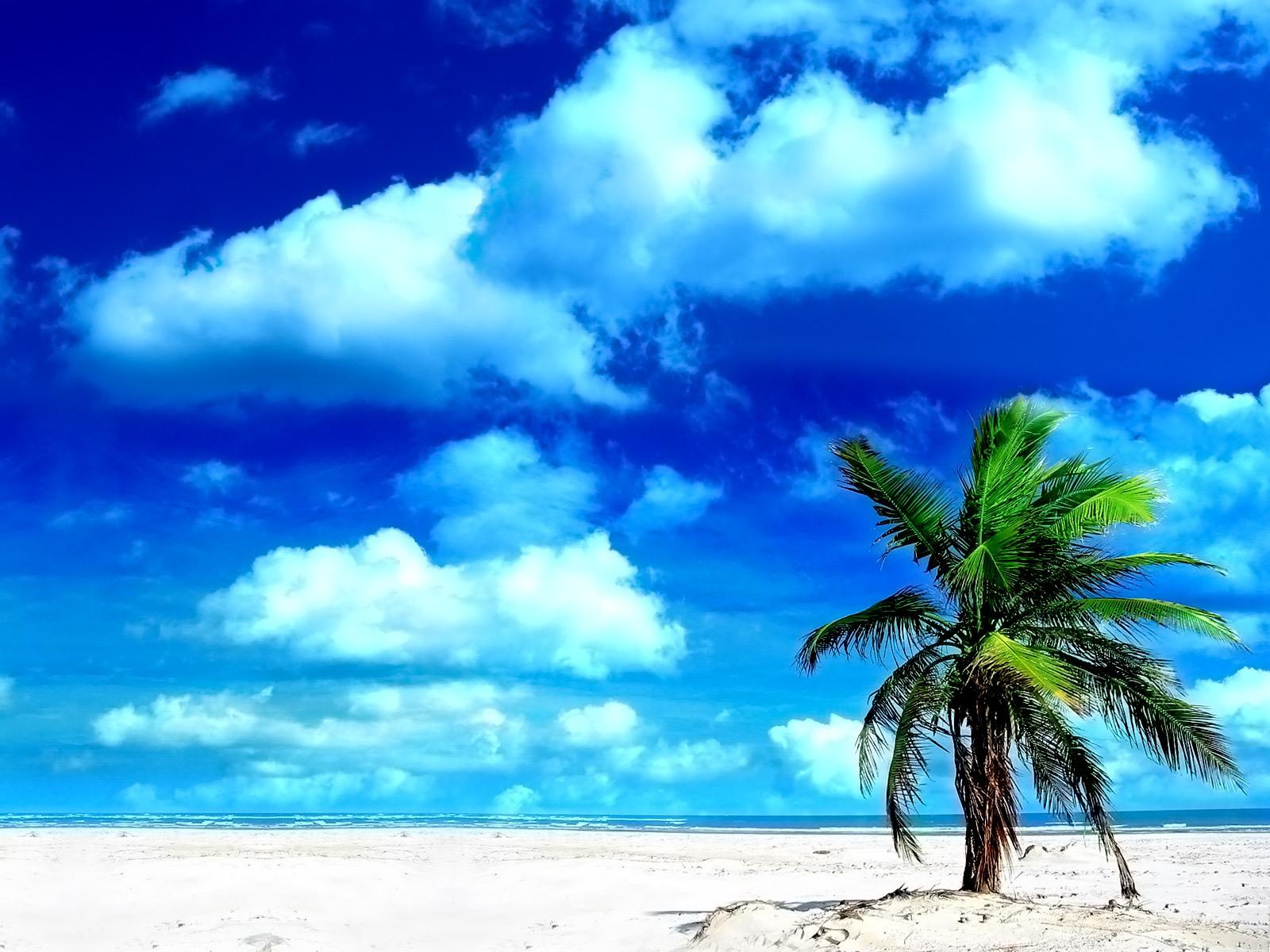 Sandy Beach Oasis Wallpaper 1600x1200