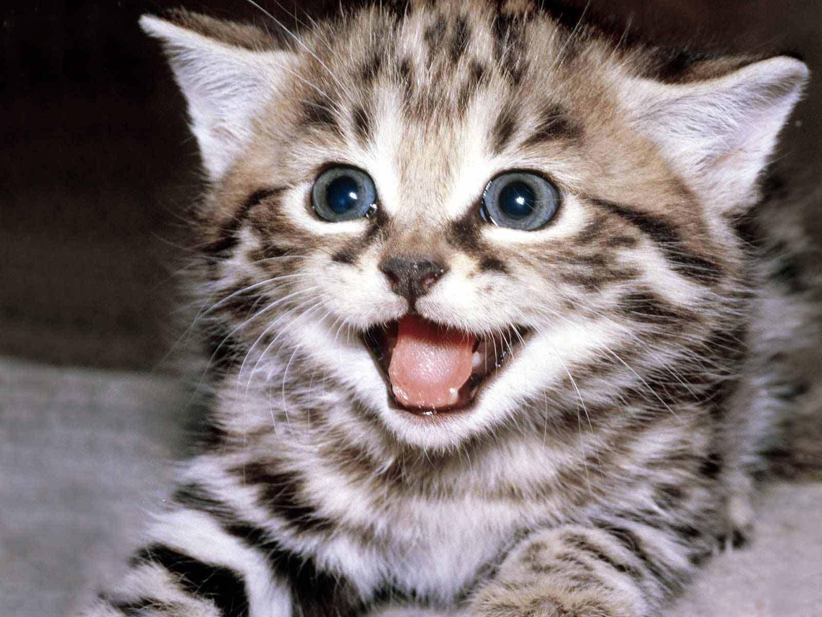 Cute Wallpapers   Cute Kittens Wallpaper 10501757 1600x1200