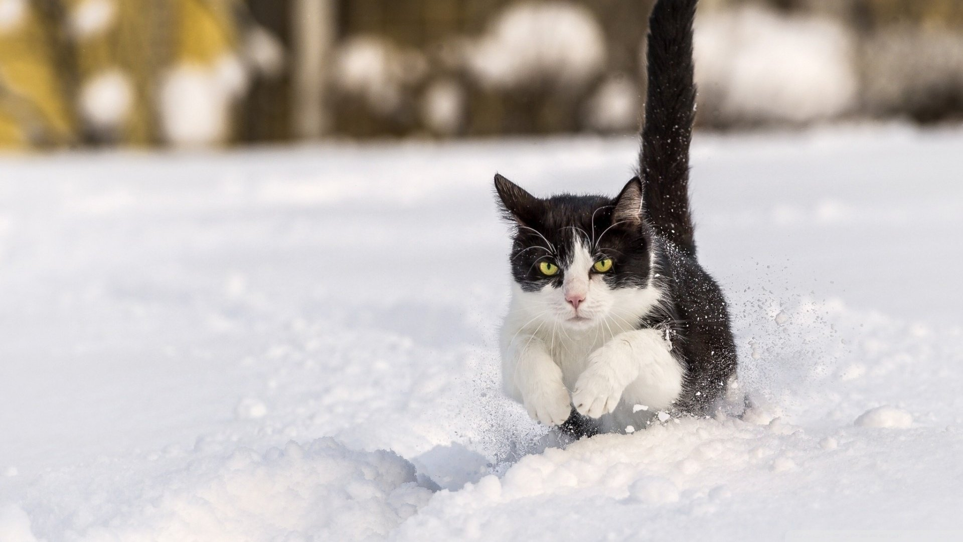 Image result for cats in snow