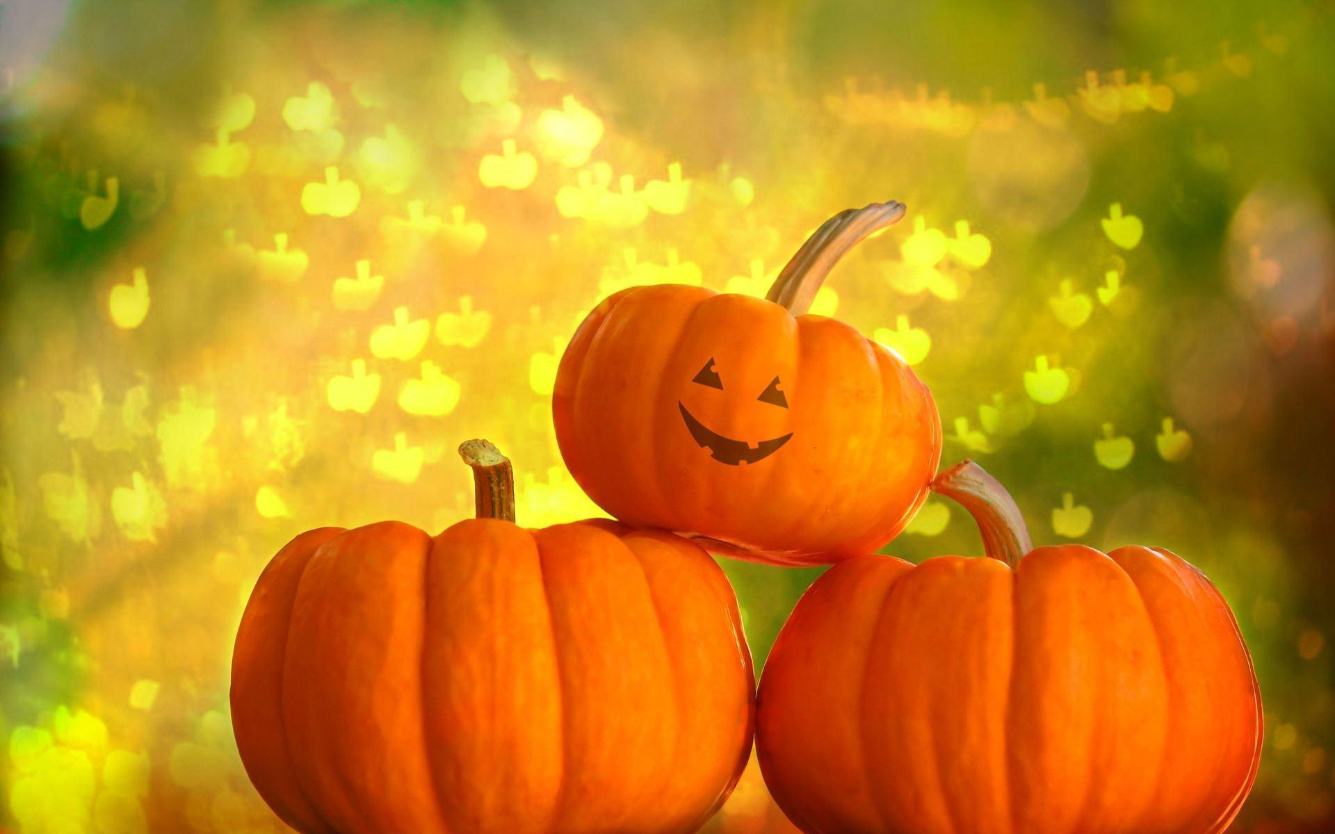 Pumpkins Wallpaper 30 Background Pictures 1920x1200