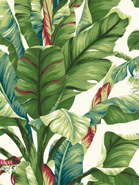 with red banana leaf wallpaper pattern at7068 pattern name banana leaf 480x640