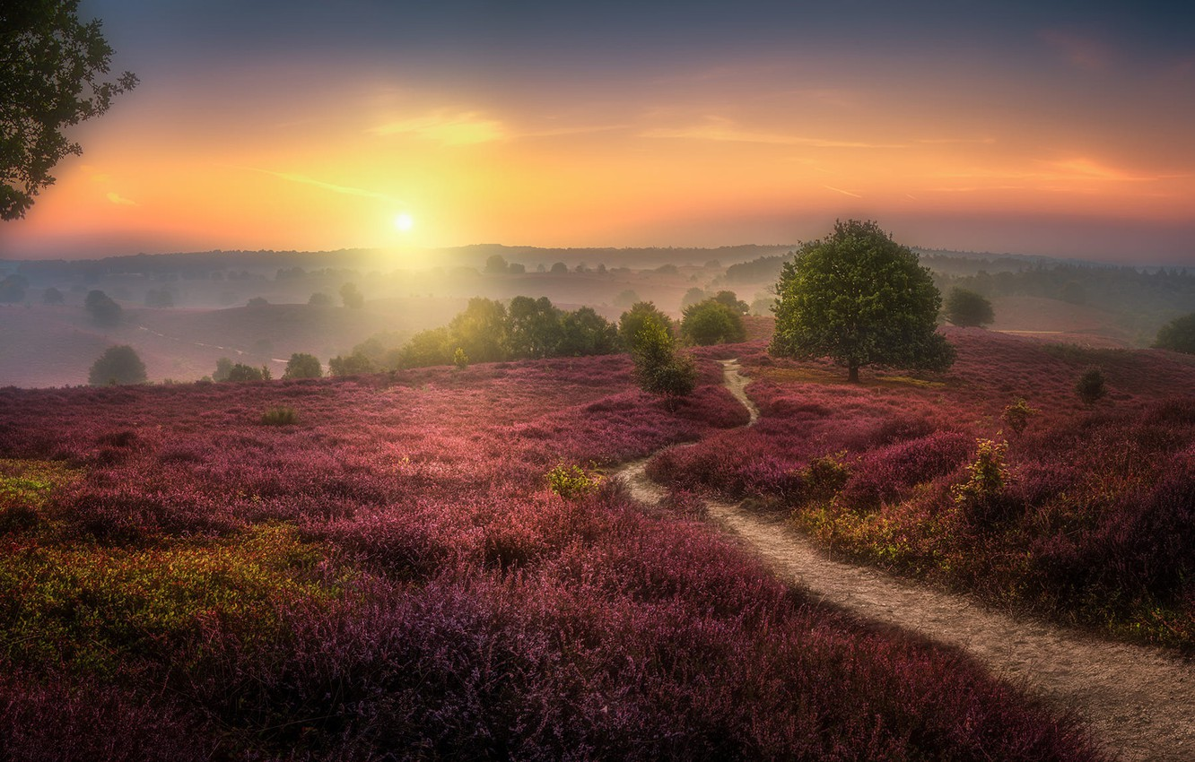 Wallpaper field sunset Herman van den Berge The Veluwezoom 1332x850